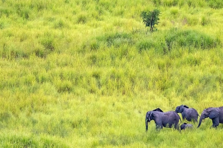 Garamba National Park Celebrates 80th Anniversary